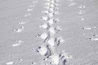 Lonely trail in the deep snow