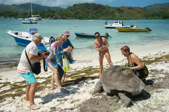 Giant Tortoise at the Seychelles with tourists
