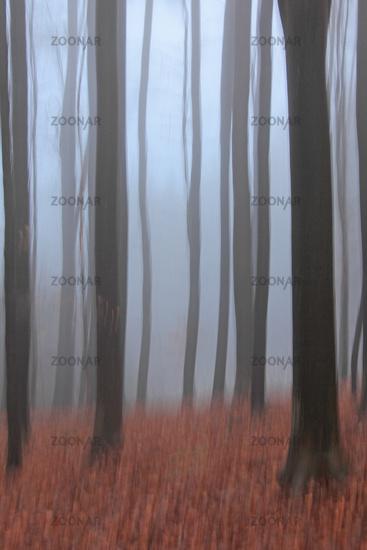 Trees, Wipe effect