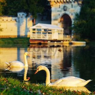 Schwan im Teich vor einem Schloss