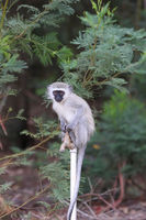 monkey sitting on a tap