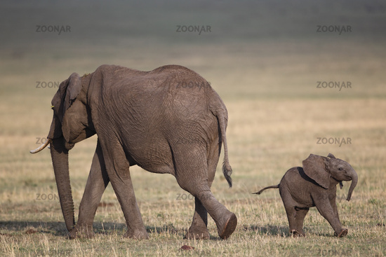 Baby elephant with mother, Masai Mara, Kenia.