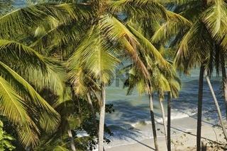 Tropische Landschaft bei Miches, Dominikanische Republik, Karibik  (Cocos nucifera)