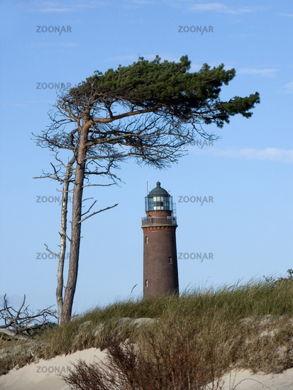 Lighthouse Darsser Ort and windswept tree