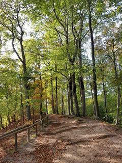 Herbstlicher Weg im Buchenwald