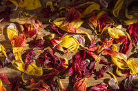 Withered petals in sunlight