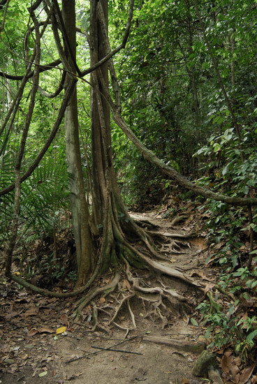 Photo Series Rainforest Views From Canopy Layer Down To Forest
