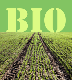 controlled biological cultivation of grain