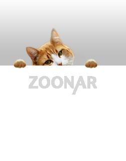 Verspielte Katze auf der Lauer nach Beute