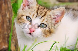 Katzenbaby - kitten 02