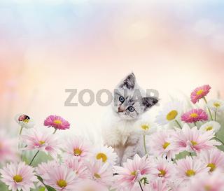 white kitten in the flower garden