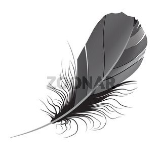 feather. Vector illustration