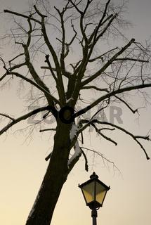 Baum mit Lampe