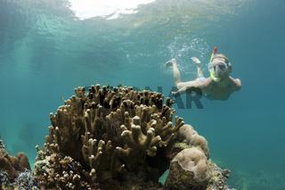 Schnorcheln in den Rock Islands, Mikronesien, Palau, Snorkeling Rock Islands, Micronesia