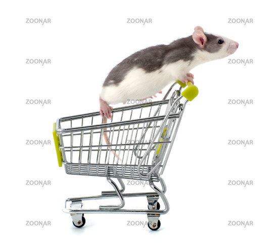 Decorative rat sitting in a miniature shopping trolley.
