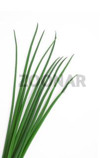 Schnittlauch - allium schoenoprasum - chives