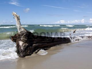 Baumstamm am Strand
