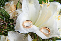 Closeup of two golden wedding rings on flowers