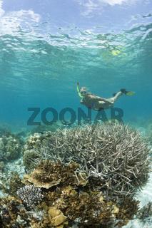 Tauchen in Palau, Mikronesien, Palau, Skin Diving at Palau, Micronesia, Palau