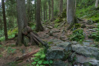 Hiking trail at forest