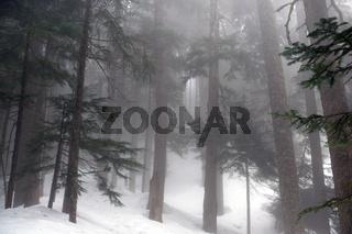 Märchenwald im Winter