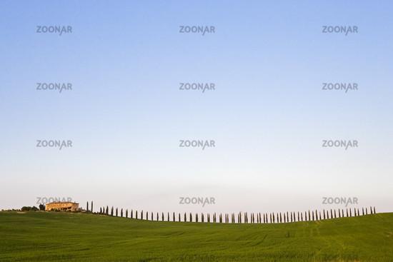 Baumreihe mit Landgut in der Crete, Toskana, Italien, Line of trees with manor in Crete, Tuscany, Italy