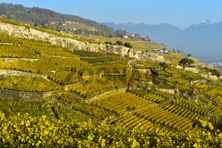 Terrassierte Lavaux Weinberge im Herbst, Rivaz, Lavaux, Waadt, Schweiz