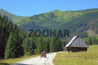 Pferdekutsche auf der  Chocholowska Lichtung, West Tatra, Polen.