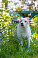 Mixed breed dog in a garden