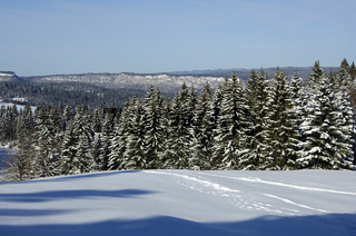 Verschneiter Fichtenwald im Jura