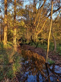 Herbstliche Auenlandschaft im Abendlicht