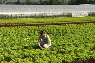 Feldarbeit im Gemüseanbau