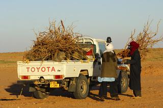 Feuerholztransport in der Sahara