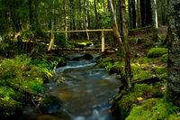 Rustic Wooden Bridge over Stream in Woods