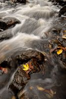 Autumn Leaves and Rapids of a Stream