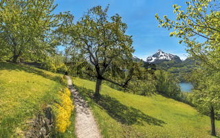 Trail through an orchard in the Alps mountains