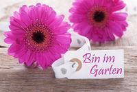 Pink Spring Gerbera, Label, Im Garten Means In The Garden