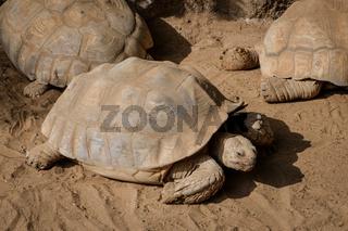 turtles, tortoise