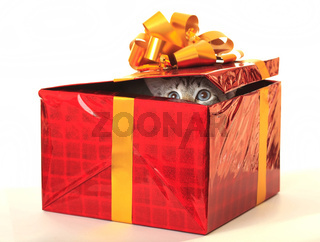 Cat as a gift.