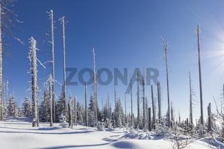 Winter im Bayerischen Wald, winter in bavarian forest