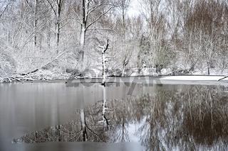 Waldsee im Winter