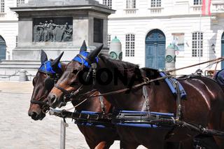 Fiaker vor der Wiener Hofburg