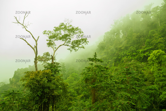 Foggy green forest