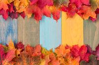Dried colorful maple leaves border