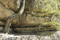 Beeches and sandstone rocks, Bohemian Switzerland, Czech Republic