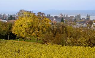 Spätherbst um Mittelzell, Reichenau am Bodensee