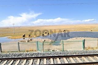 Viehhaltung an der Strecke der Tibet-Bahn