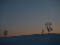 Baumgruppe im Abendlicht