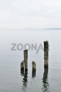 Holzpfosten im Bodensee - Poles in the Water