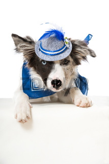 Border Collie mit Tirolerhut
